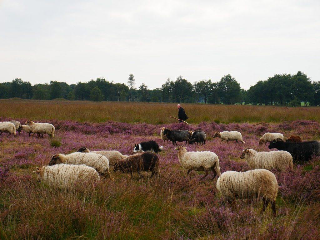 Verhuur in Drenthe